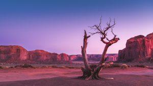 Dead tree in desert light